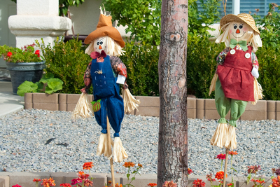 Scarecrows seem to be more popular than usual in the Austin area this year.