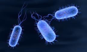The study shows the immune system begins its front-line defense when a virus or bacteria begins to attack the body.