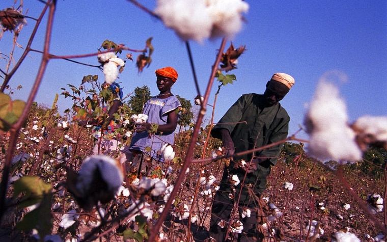 This year, maximizing income potential was essential because low cotton prices are squeezing margins.