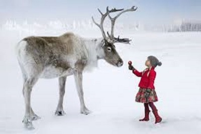 Medium reindeersnow