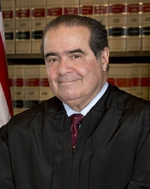 Large antoninscalia