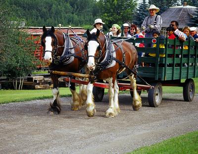 Medium shutterstock horsedrawn hayride