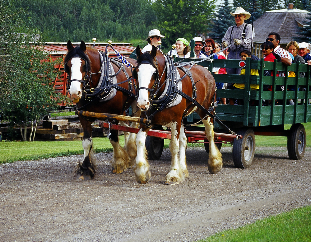 Hayrides With Horses Slated In Wheaton And The Region