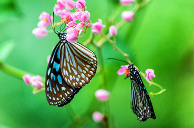 A flower garden will attract the fluttering insects.
