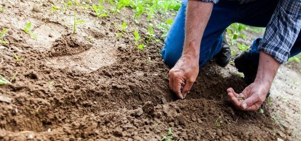 Large farmer planting seeds 1280