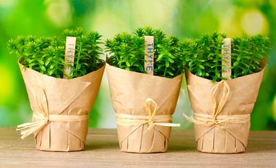 Learn which herbs grow best in Austin at an upcoming Zilker Botanical Garden seminar.