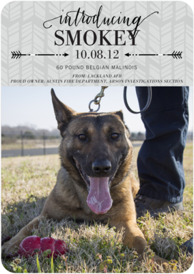 The Austin Fire Department welcomed Smokey, a new accelerant-sniffing canine, who will work in the Arson Investigations unit with his handler, Lt. Randy Elmore. Smokey is a 2-year-old, 60-pound Belgian malinois who will replace Leo, who is retiring