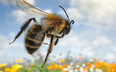 U.S. winter bee colony losses are well below average, the USDA said.