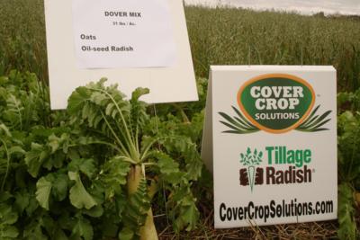 Medium covercrop