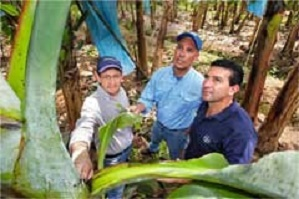 Bayer experts Boris Coto Calvo, Rodrigo Olivares and Rodolfo Ceciliano Solis (left to right) check banana plants at the