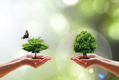 Medium shutterstock biodiversity butterfly tree hands