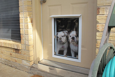 Giving a dog its own entrance to a home is convenient, but must be done carefully.