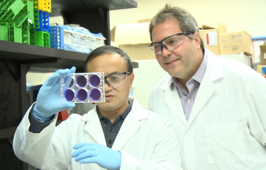 Wenjun Ma, assistant professor of diagnostic medicine and pathobiology at Kansas State University, left, and Jürgen Richt, director of the U.S. Department of Homeland Security's Center of Excellence for Emerging and Zoonotic Animal Diseases