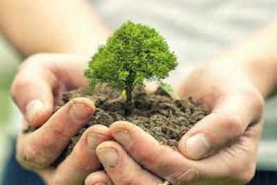 Medium treeplanting