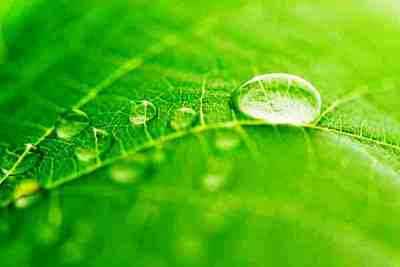 Water-use efficiency refers to the ratio of water metabolized by a plant to the water lost by a plant.