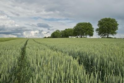 Medium agriculture