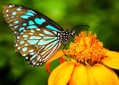 Medium shutterstock butterflygarden closeup