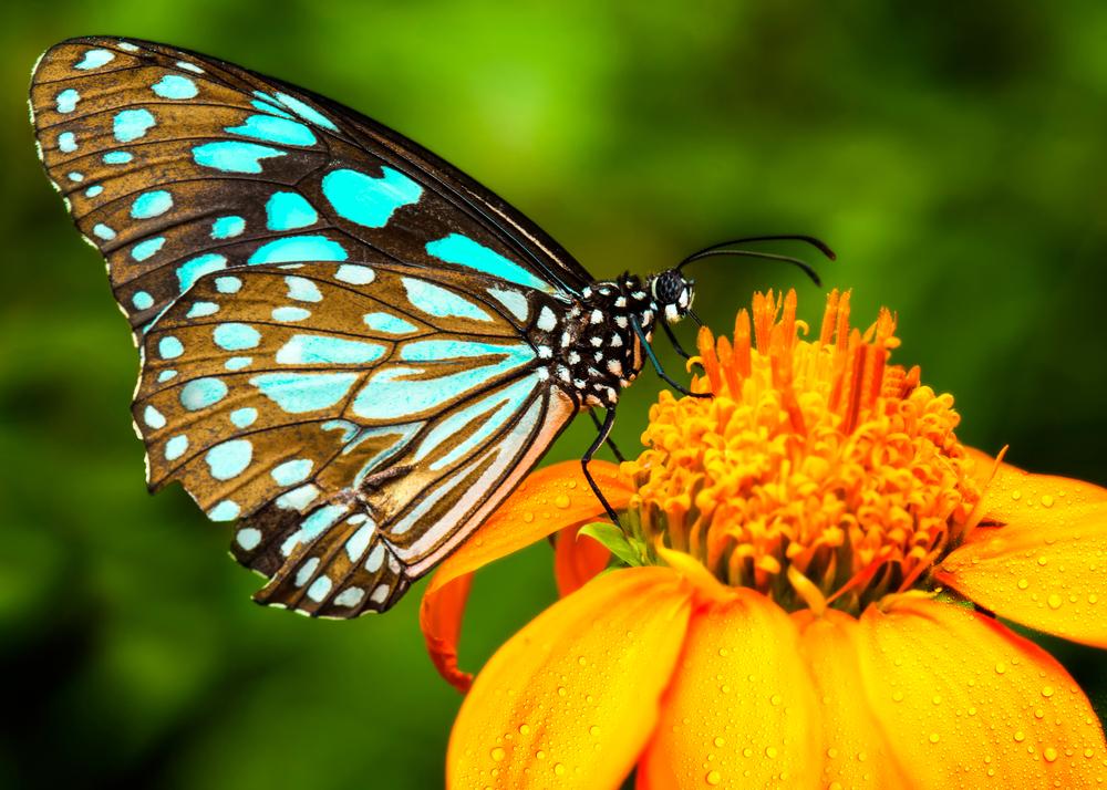 Shutterstock butterflygarden closeup