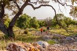 SIDEBAR EXTRA: Near the main entrance, Sienna Trail Park is one of the most scenic and popular parks in Rancho Sienna.