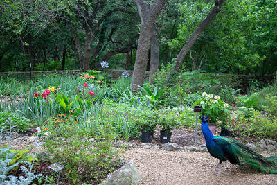 Residents of the Mayfield Park Nature and Nature Preserve may greet visitors.