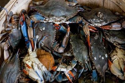 Medium crabs
