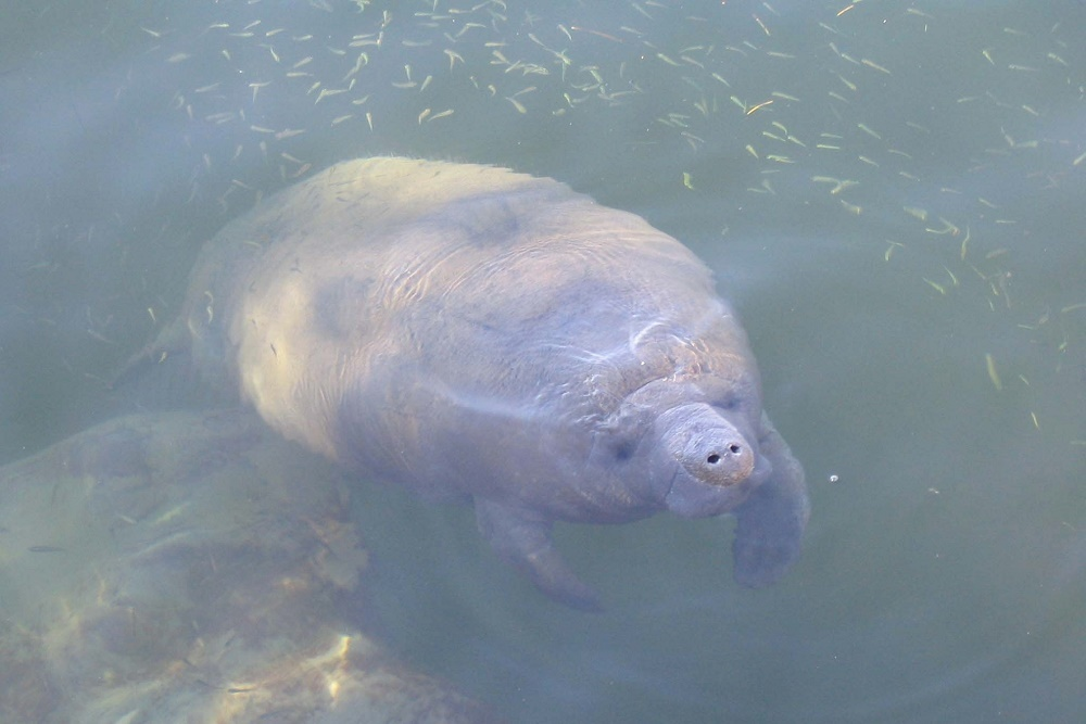 Save the Manatee Club selected a Blackbaud solution to enhance its fundraising activity.