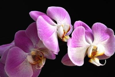 Various vendors will be on hand at the Heart of Texas Orchid Society's annual sale this weekend.