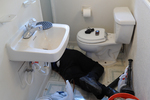 Replacing a toilet can be a chore, but can save money and immediately improve aesthetics.