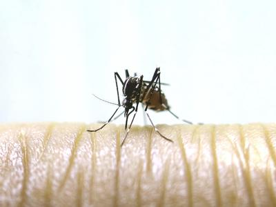 Mosquitoes can be very pesky not only outdoors, but indoors too.