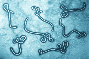 Ebola research overshadows other development efforts, report indicates.