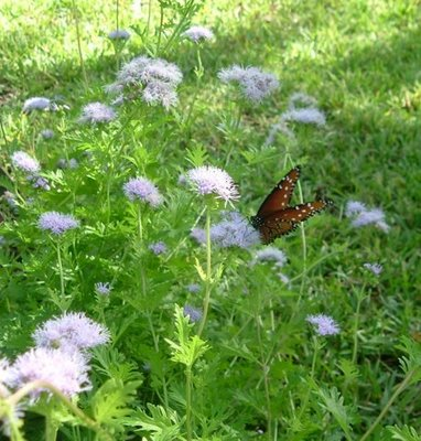 A variety of flowers will attract butterflies to your garden.