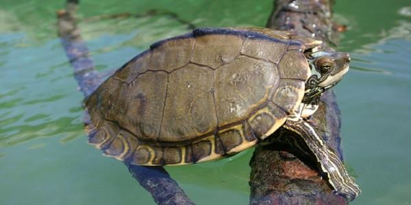 Large turtlephotofromthebiodiversitycenter1280x640
