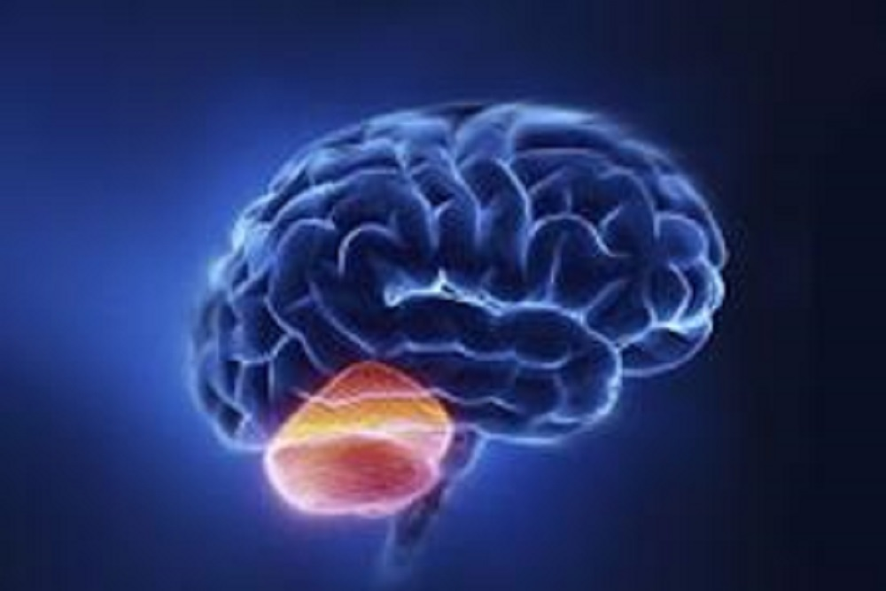 HGG is a common form of brain cancer that is highly aggressive.