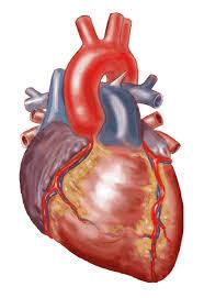 Generic heart disease medications may treat Ebola