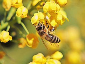 The Healthy Hives 2020 Initiative is one of Bayer's efforts to improve the honey bee population.