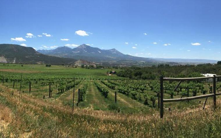 Terror Creek Winery is owned by John and Joan Matthewson.