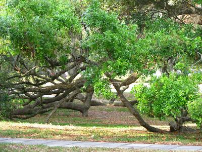 Pruning trees requires knowing when to cut and how much.