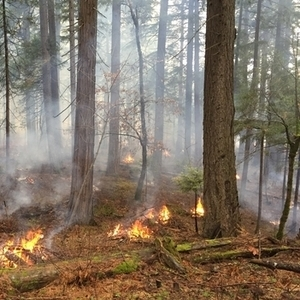 Rock Island's parks board has approved a controlled burn at the Sylvan Slough Natural Area.
