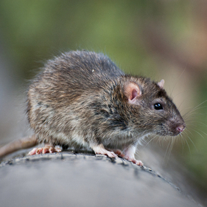 Lassa fever has arrived on Sweden's shores via a traveling woman.