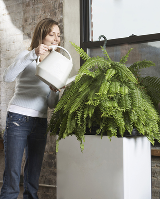 Feeding, watering and various levels of light depending on the plant will make hanging baskets happy and healthy.