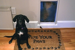 Having their own entrance gives pets a new level of independence at home.
