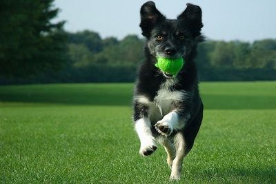 The NADA Foundation supports Canine Companions for Independence.