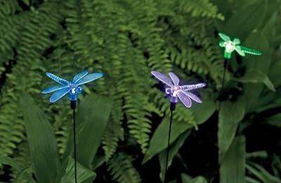 These pretty dragonflies light up a garden.