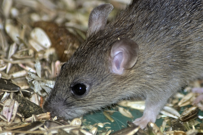 A growing community can stir up a lot of mice or rats.