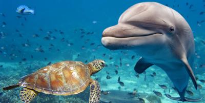 Medium dolphin