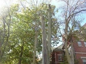 Medium dangeroustree