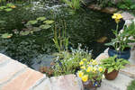 Garden ponds offer a relaxing, organic feature for backyard spaces.