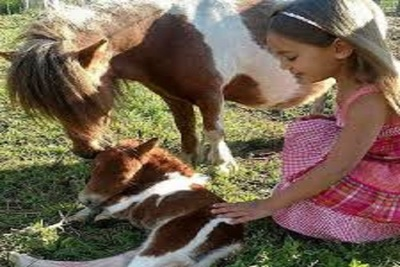 Medium horsetheraphy