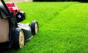 Medium lawn