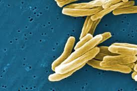 Freshwater sources may help fight drug-resistant TB and other infections.